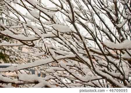 눈 쌓인 나뭇가지, 겨울 풍경 46709095