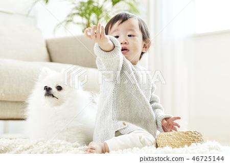 유아,베이비,아기,어린이,포메라니안,강아지,애완동물,반려동물,반려견,집 46725144