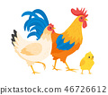 bird,chicken,family 46726612