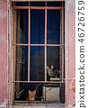 Two cute kitten hiding behind window 46726759