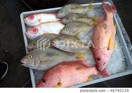 賣魚3 46740139