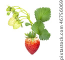 Ripe strawberries from the garden, isolated  46756069