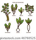 turnip, shepherd's purse, seven vernal flowers (java water dropwort 46760525
