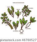 turnip, shepherd's purse, seven vernal flowers (java water dropwort 46760527