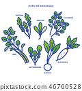 turnip, shepherd's purse, seven vernal flowers (java water dropwort 46760528