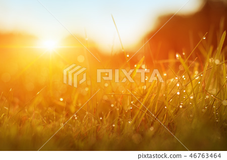Grass. Fresh Green Spring Grass With Dew Drops 46763464