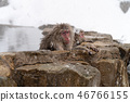 온천에서 피로를 잡는 원숭이 46766155