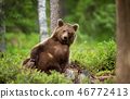European brown bear leaning against the tree 46772413