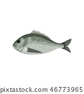 Detailed flat vector icon of sea bream, side view. Fish with small fins. Marine animal. Seafood 46773965