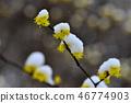 从春天的视图 46774903