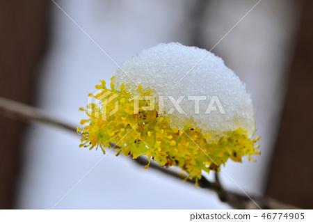 봄눈 46774905
