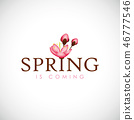 spring is coming typography with cherry blooming flowers pink petals 46777546