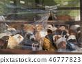 교토 동물원 46777823