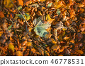 Leaves in warm colors in the fall with maple 46778531