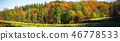 Autumn scene of a forest in glorious golden colors 46778533