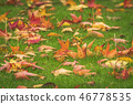 Golden maple leaves on a green lawn in the fall 46778535