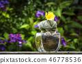 Cactus flower Astrophytum Myriostigma blooming 46778536
