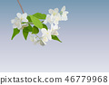 Beautiful spring blossoming tree branch of 46779968