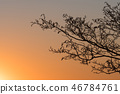 Alder tree branches by sunset 46784761