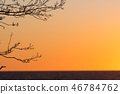 Tree branches by sunset 46784762