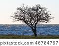 Lone tree silhouette 46784797