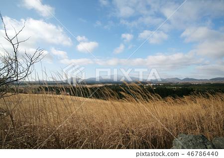 제주의 갈대밭과 멀리보이는 한라산 46786440