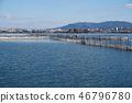 琵琶湖 花莖 湖泊 46796780
