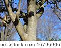 동백 나무 · 동백 나무 (차나무과) 나무 껍질 · 황 다랑어 · 목의 피부 외피 · 껍질 46796906