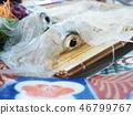 Yobuko的魷魚 46799767