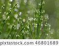 閃耀在草葉子的早晨露水 46801689