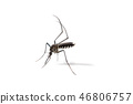 close-up of mosquito isolated on white background 46806757