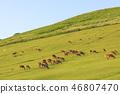 나라현 · 와카 쿠사 · 사슴 · 황혼 46807470