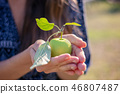 Summertime in garden 46807487