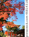 The autumn leaves and yellow leaves of Koyasan 46814318