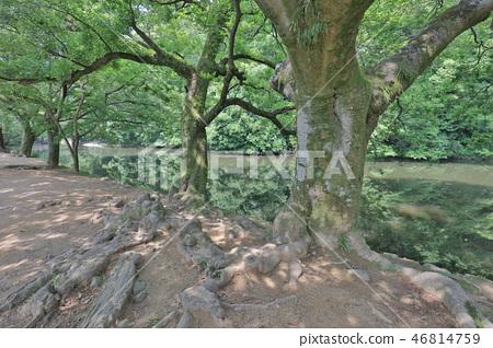 an Zen garden, Ritsurin Park, Takamatsu, Shikoku 46814759