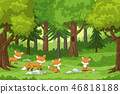Cute Foxes in the Forest 46818188