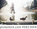 在噴泉前面的兩隻小雞 46823668