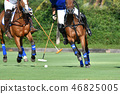 Polo Player protect a polo ball. 46825005