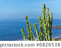Branches of cactus plant against blue water  46826538