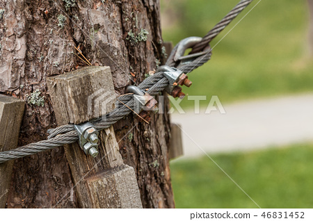 The cable is attached around the tree 46831452