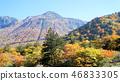 오쿠히다, 단풍, 다카야마 시 46833305