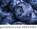 Fresh ripe blueberries with drops of dew 46834402