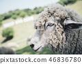 酷羊配置文件 46836780