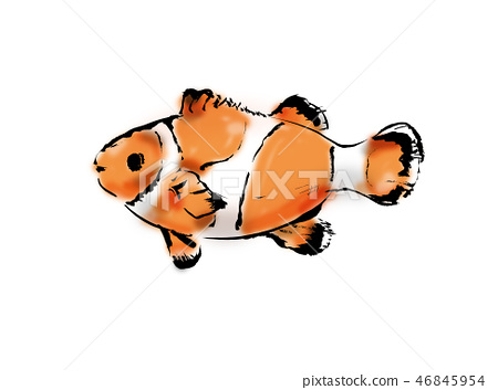 Anemone fish 46845954