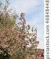 귀여운 작은 분홍색 꽃 에리카 46848448