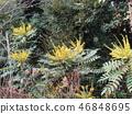 꽃, 플라워, 노란색 46848695