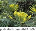 꽃, 플라워, 노란색 46848697