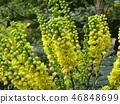 꽃, 플라워, 노란색 46848699