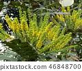꽃, 플라워, 노란색 46848700