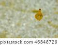 烏賊 墨魚 魷魚 46848729